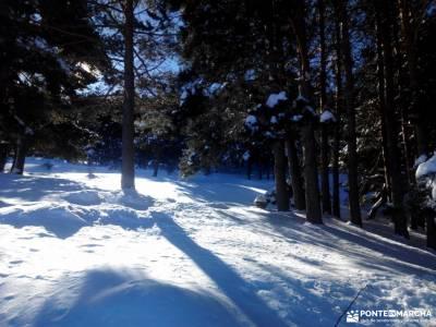 Ladera Mojonavalle-Bosques Canencia;viaje fin de año bosque irati pasear por madrid